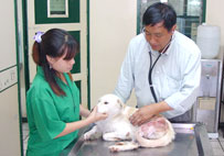 Veterinary Care by Professional Veterinarian