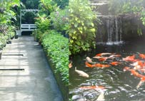 Brightly colorful fish waterfalls and greenly garden