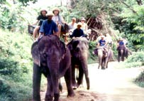 Enjoy our friendly elephant trekking activity
