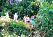 "Jungle-walk to ""Tone-Pariwat"" Waterfall"