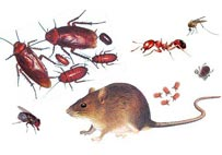 We specialize in control of termites, roaches, ants, fleas and other insects in Phuket.
